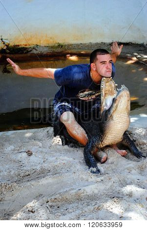 American alligator wrestling in the Everglades National Park