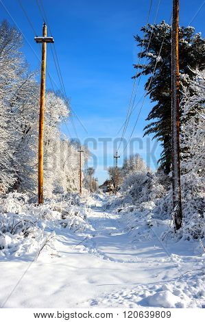 Trees and utility lines covered with snow after snow storm