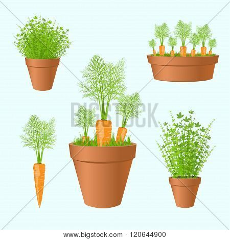 Set Of Garden Pots With Fresh Carrots And Greens.carrot  And  Green Grass  In Pots,printable Files.