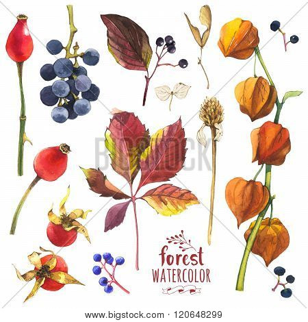 Watercolor illustration with branches, leaves and berries.