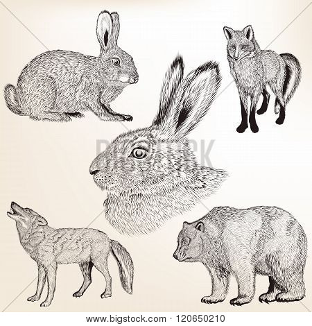 Vector Set Of Hand Drawn Vector Animals In Engraved Vintage Style
