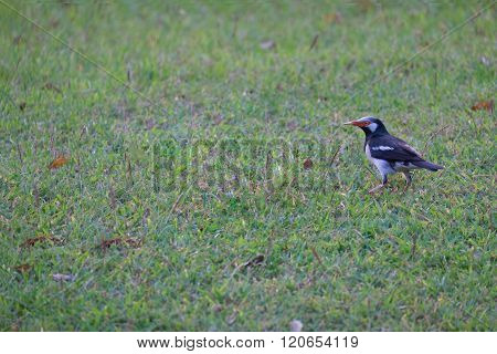 Red Mouth And Black And White Stripe Small Bird