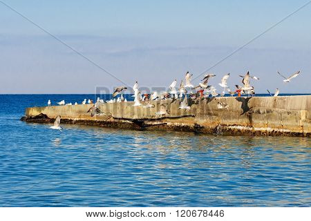 Seagulls Taking Off From The Breakwater.