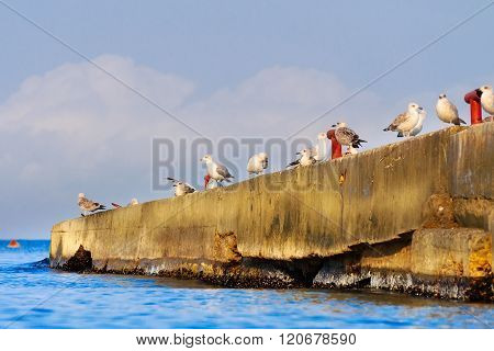 A Flock Of Seagulls On The Breakwater