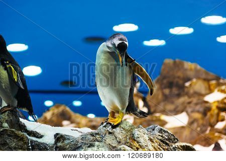 Penguin in park at Tenerife Canary - animal background