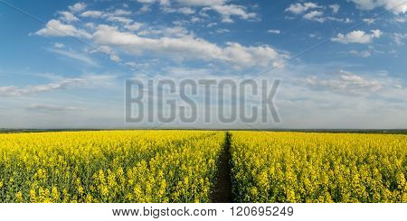 Landscape With Agricultural Fields