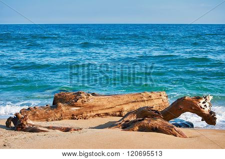 Trunk On The Sea Shore