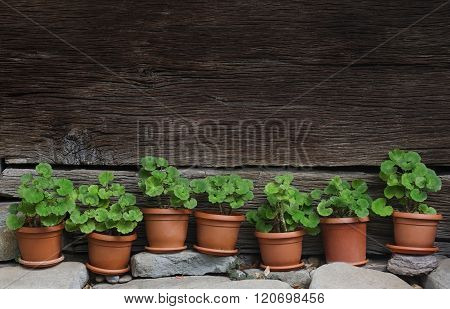 Vases With Green Plants Next To A Traditional Wooden Fence