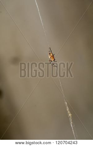 Spider Web Macro