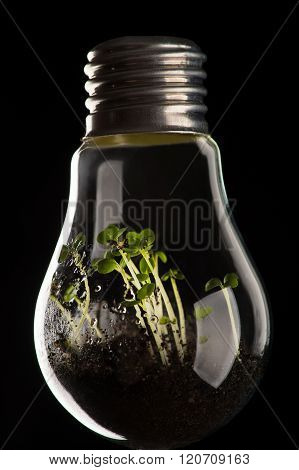 plants growing in light bulb, concept