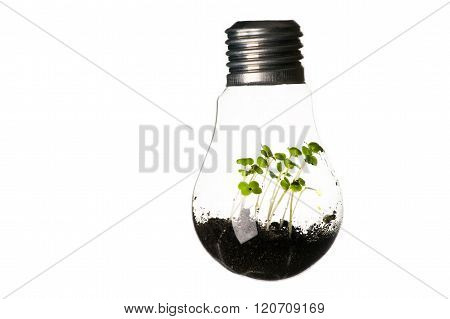 plants growing in light bulb isolated on white