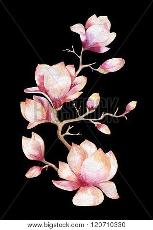 Painting Magnolia flower . Hand drawn Watercolor floral