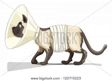 Little cat with collar and bandage illustration