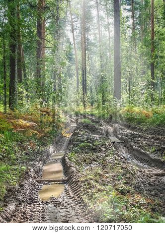 Broken Road After Rain In A Summer Forest