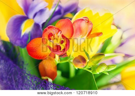 beautiful colorful bouquet of fresh spring flowers