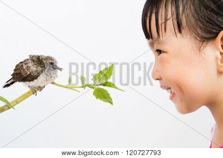 Asian Little Chinese Girl Watching A Small Cuckoo