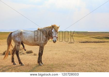 Portrait Full Body Of Beautiful White Male Horse With Perfect Rim Light Against Wide Meadow Landscap