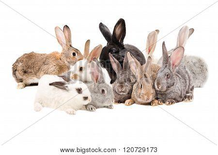 Group rabbits