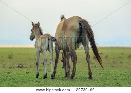 Portrait Of Freedom Horse Pony In Natural Wide Meadow