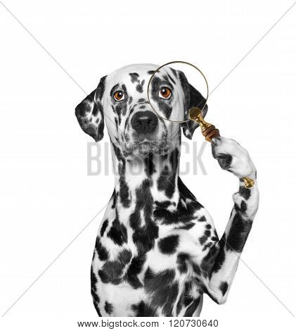 Dog Looking Through A Magnifying Glass Loup
