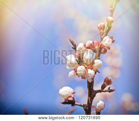Beautiful buds - budding, awakening nature