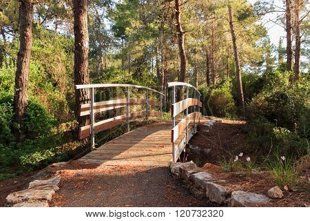 The bridge across the stream in the early morning in the park in the forest Hanita