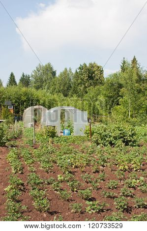 Vegetable Garden On A Suburban