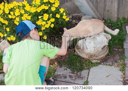 A Boy Meets With A Cat