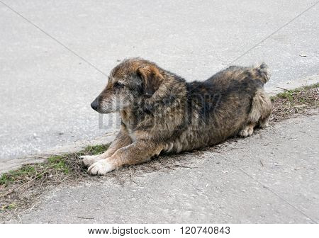 Homeless stray dog on the background of asphalt