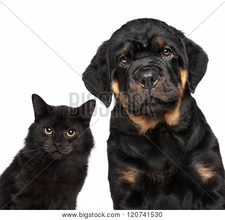 Cat and dog series. Close-up isolated on white background