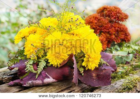 Autumn asters autumn flower arrangement on old garden table