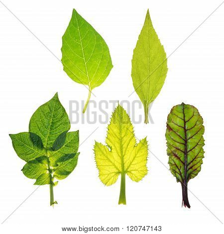 Leaves of different vegetables isolated on white