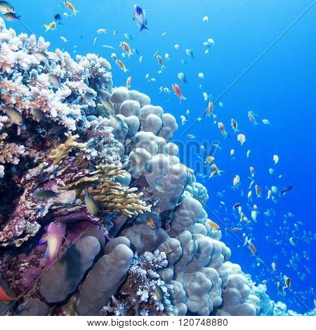 Colorful Coral Reef With Exotic Fishes In Tropical Sea, Underwater