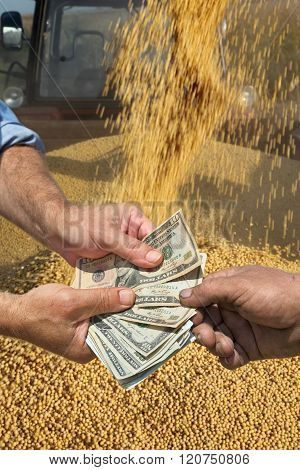 Agricultural Concept, Soybean Crop And Money In Hands
