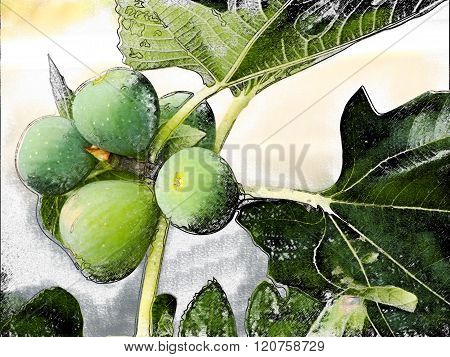 Large green figs on a tree branch in autumn.