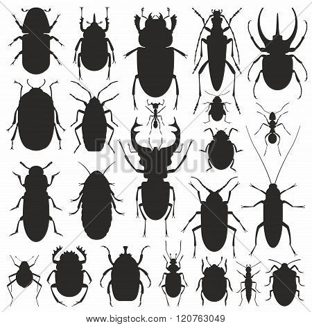 Beetles silhouette set
