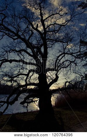 silhouette of tree shap shadow at sunset and sky