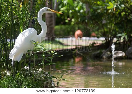 White heron near water, Dominican Republic