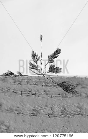 Stark Grass On White