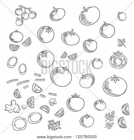Farm tomatoes vegetables sketch icons