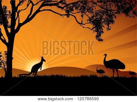 Emu Kangaroo Sunset