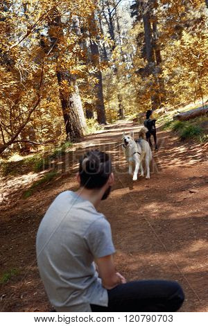 Man takes a break from walking his dogs in nature forest and stops to play fetch with them