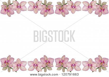 Background of blooming orchids