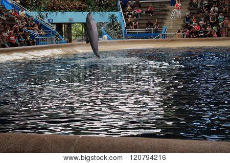 Dolphin Tail Walks