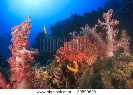 Scorpionfish on coral reef with damselfish