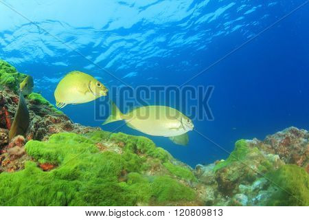 Green algae and fish in sea