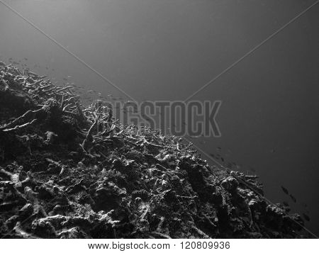 blurred background of coral reef ecosystem
