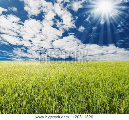Green Gass With Blue Sky And White Cloud