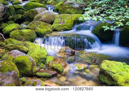 Creek In The Ligurian Alps