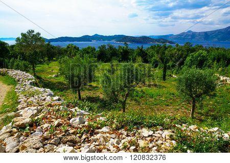 Lopud Landscape